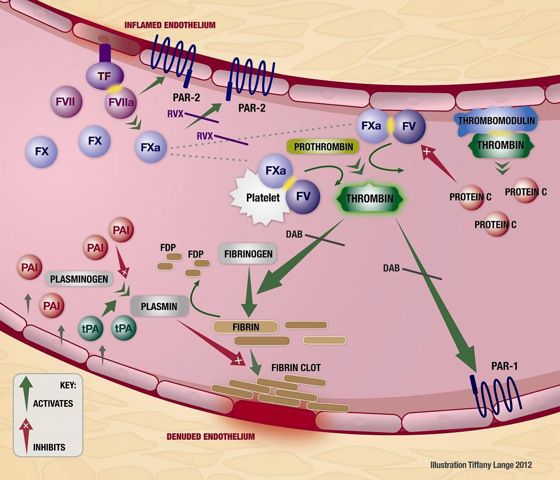 Furosemide in the Treatment of Acute Pulmonary Edema